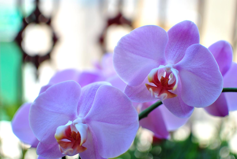 Settembre è la quinta stagione dell'anno, orchidee